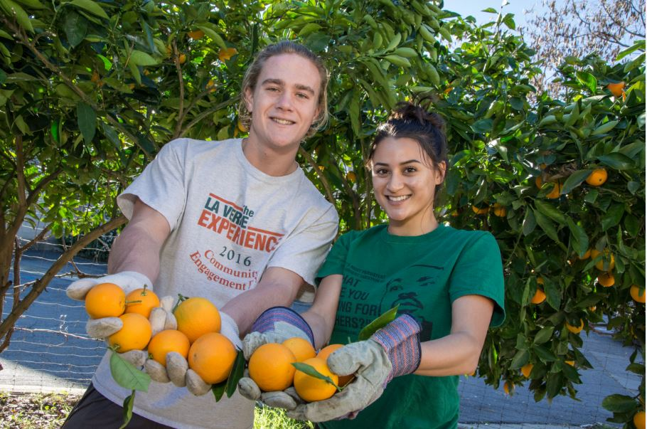 Two students pick oranges