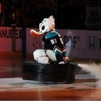 The Anaheim Ducks Mascot