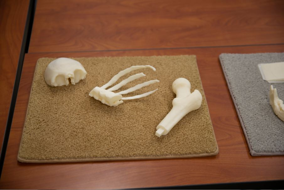 Collection of skeletal bones